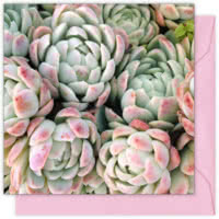 Pink Blushed Succulents